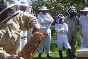 Пчеловод и общество