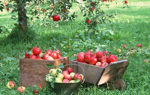 Фермерские и личные подсобные хозяйства