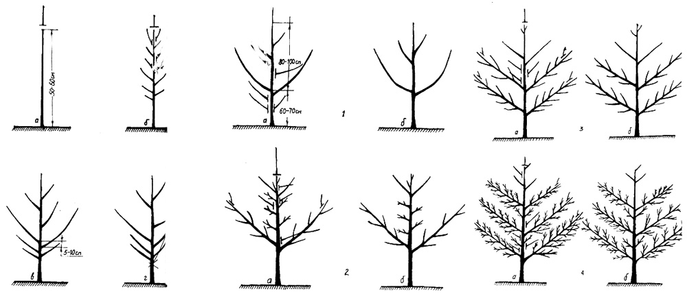 Схема обрезки и формирования