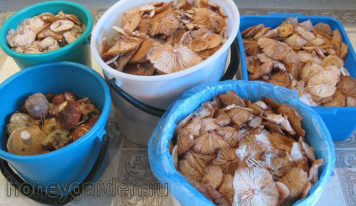 грибы перед кулинарным приготовлением на полу