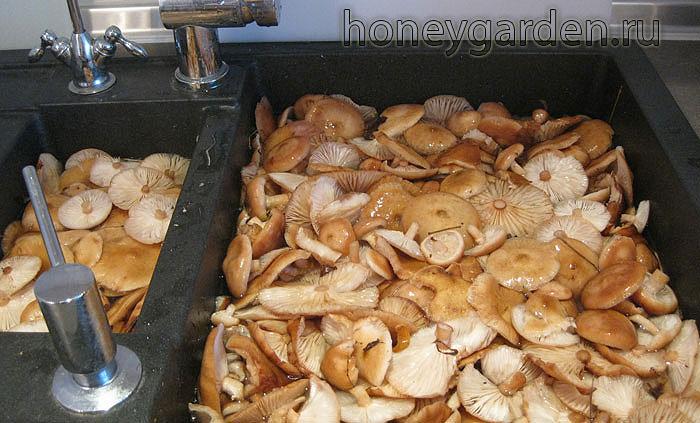 грибы перед кулинарным приготовлением в кухонной раковине