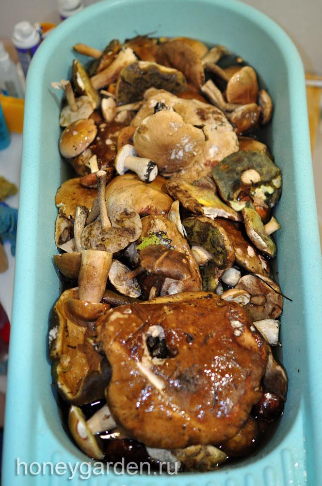 почти все грибы высыпаны в детскую ванночку, в воду с солью