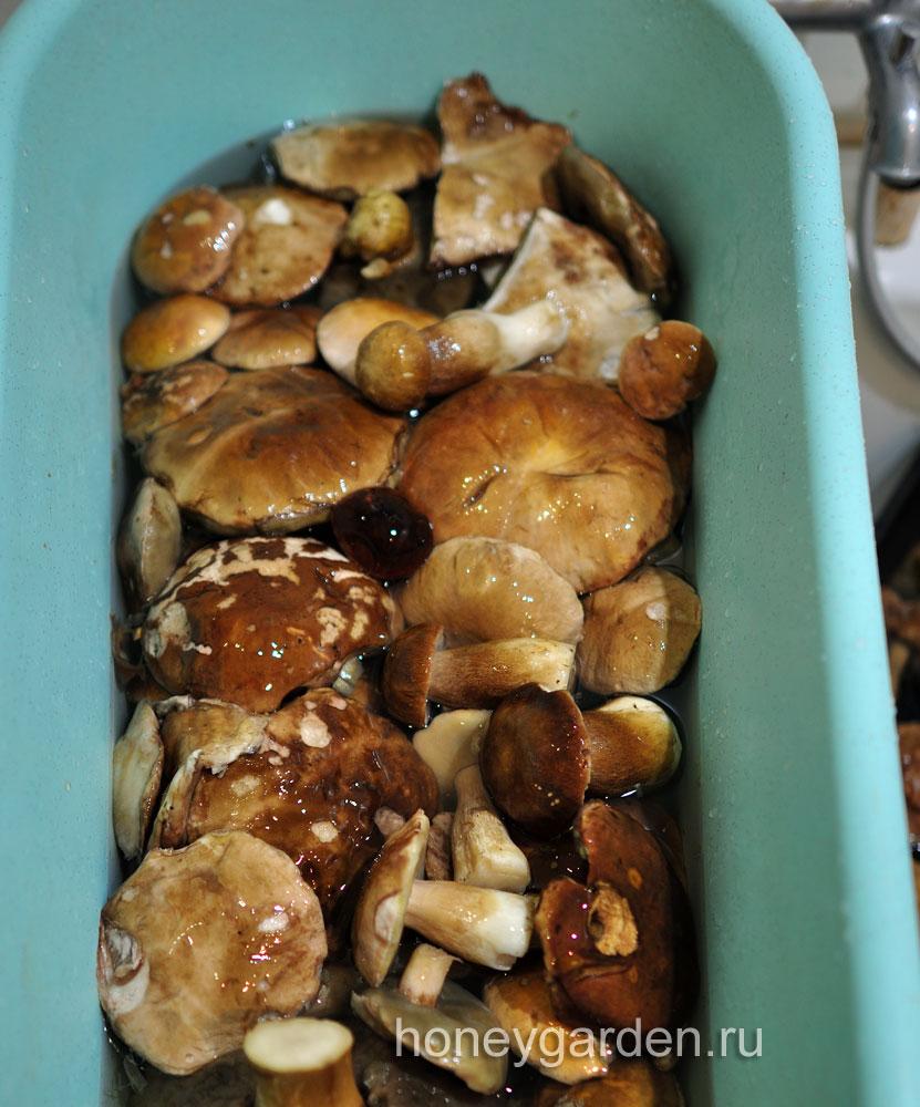 идёт переборка грибов