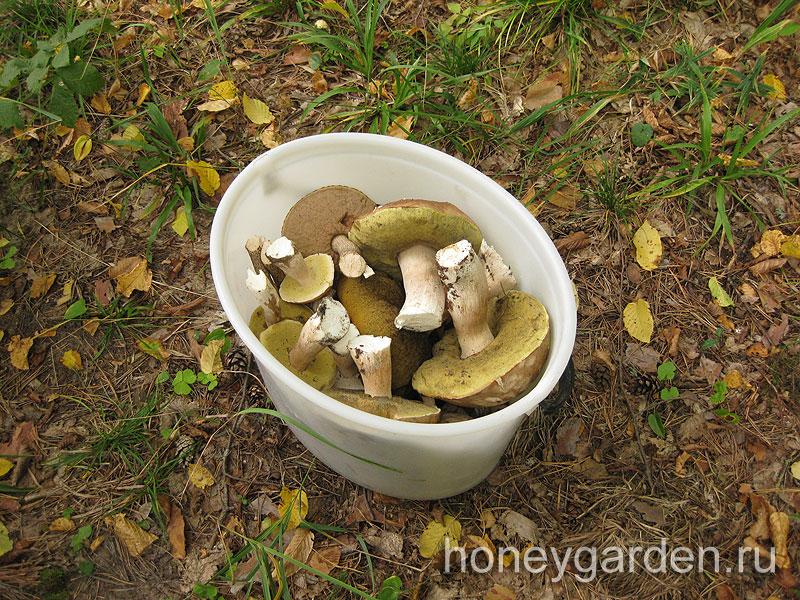 лукошко белых грибов