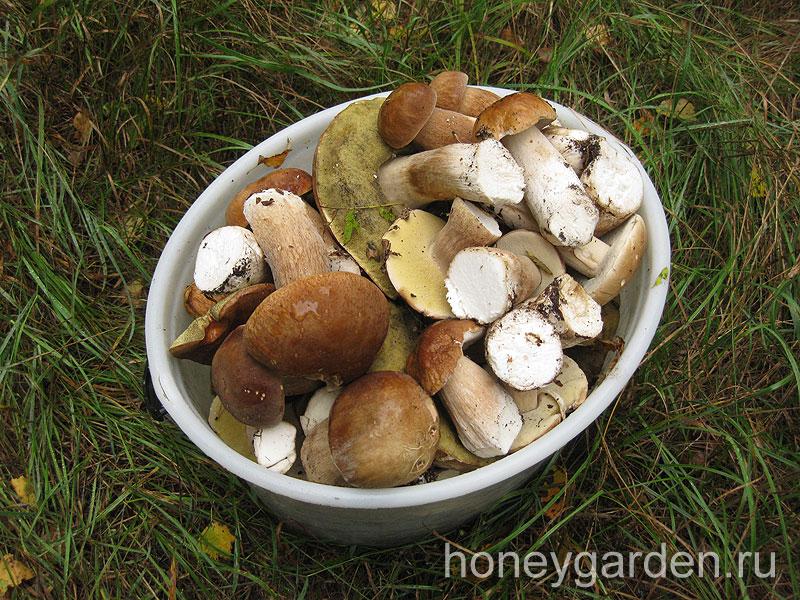 ведёрко грибов наполнилось, в основном, белыми грибами