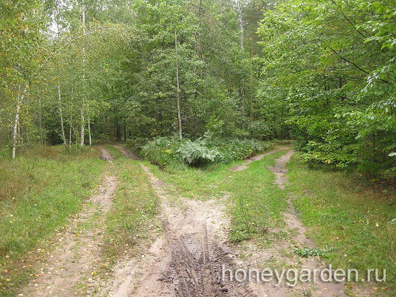 выбор дороги в лесу
