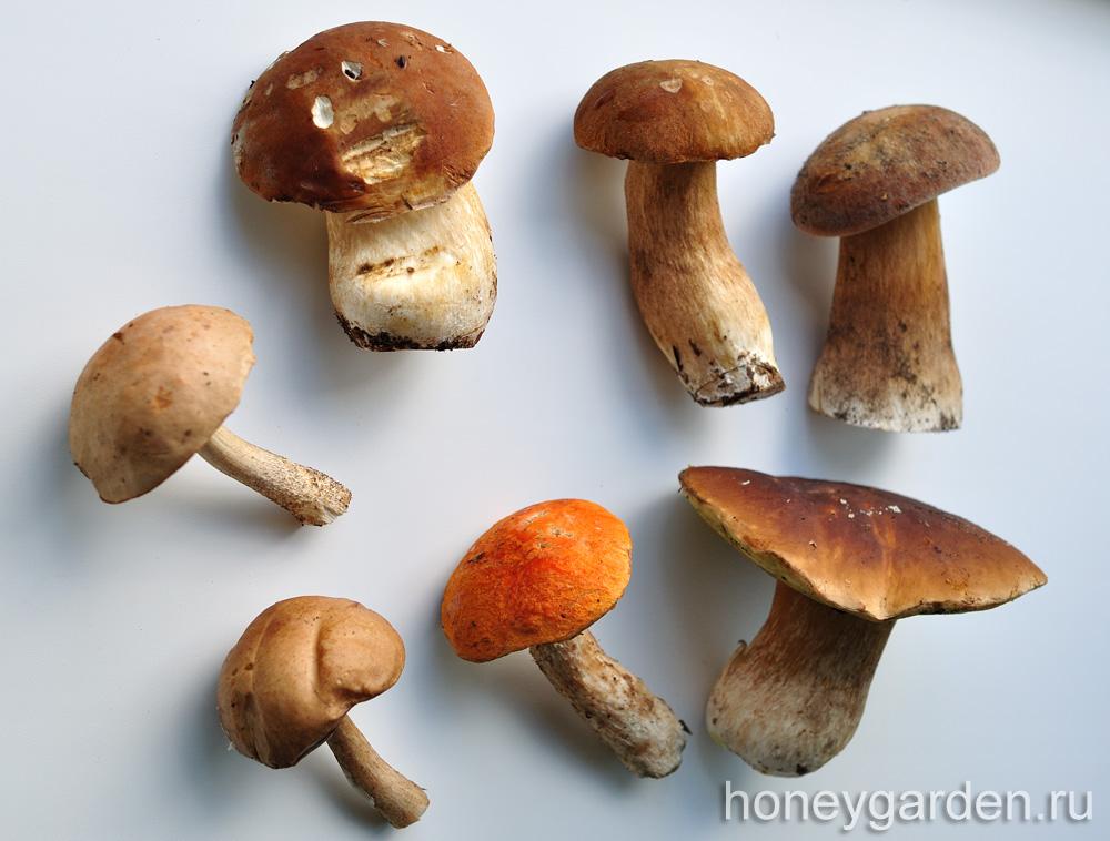 мои любимые грибы