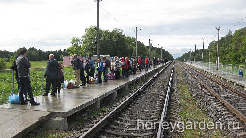 грибники уезжают в 12-30 со станции, домой, в Гомель
